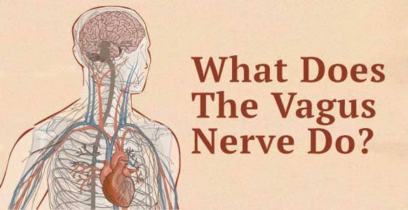 "What Does The Vagus Nerve Do? Discover How To Naturally Stimulate The ""Communication Superhighway"" Linking The Conscious & Unconscious"
